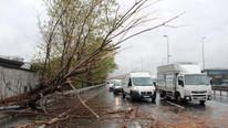 İstanbul'u sağanak vurdu; Ağaç devrildi, yollar göle döndü