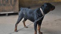 İki aile köpek yüzünden kavga etti: 2 ölü