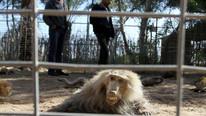 Korku filmi gibi: Ailenizi asla götürmeyeceğiniz hayvanat bahçesi