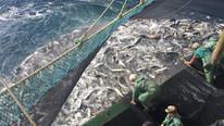 Tüm ülke Türk balıkçılarını konuşuyor