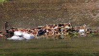 Korkunç manzara ! Sulama kanalına atmışlar