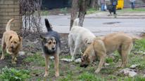 4 gündür haber alınamayan kadın profesörü sokak köpekleri öldürüp; yemiş !