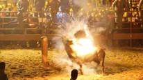Canlı hayvanı ateşe verdiler Korkunç olay...