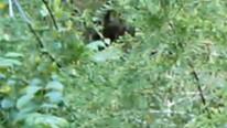 Ormanda yürürken karşılaştı... Görülmemiş canlı !
