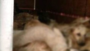 Denizli'de köpek katliamı !