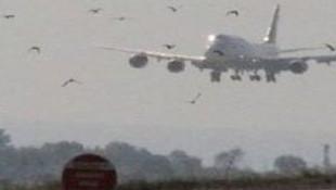 İstanbul'da hava trafiğine kuş engeli