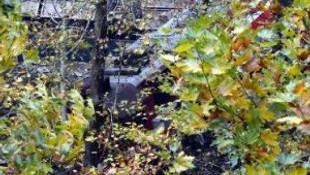 Yük trenini ağaçlar kurtardı