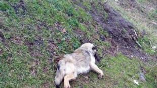 Tekirdağ'da hayvan katliamı