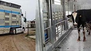 Hollanda'dan gelen hayvanları geri gönderdiler