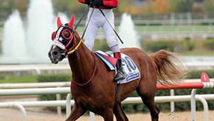 At değil darphane !