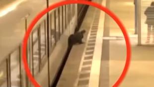 Metroda dehşet anları !