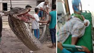 7 metrelik dev yılan görenleri şoke etti