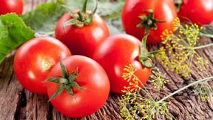 Rusya'dan beklenen domates müjdesi geldi