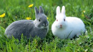 Bakanlıktan tavsiye: ''Tavşanlar gibi sevişin''