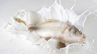 Balık yedikten sonra süt içince hastanelik oldu