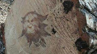 Ağaç gövdesinden 'gülen yüz' çıktı