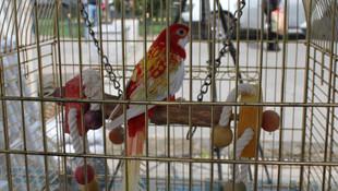 Cimbom isimli papağan yer değiştirdi