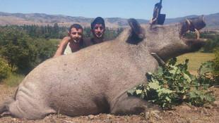 Tokat'ta 350 kilo ağırlığında domuz avladılar