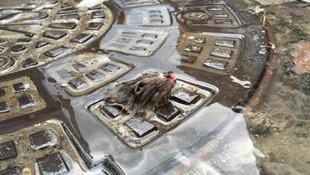 Günün fotoğrafı: Selde mahsur kalan fare