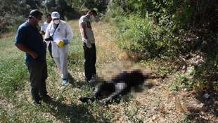 Zeytinlikte erkek cesedi bulundu !