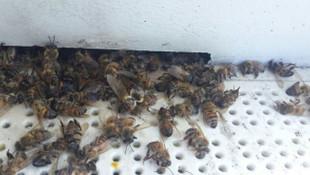 1 milyon arı telef oldu