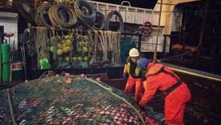 Balıkçıların ağına takılan korkunç canlılar