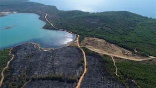 Ayvalık'taki orman yangını sabotaj mı ?