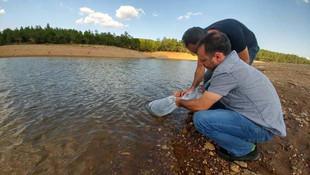Binlerce yavru sazan balığı 9 gölete salındı