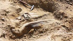 6 ton ağırlığında ve 9 metre yükseklikte dinozor fosili bulundu