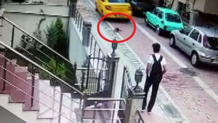 Köpeği ezip ardına bakmadan kaçtı
