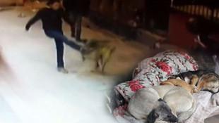 Magandalar köpeği bıçaklayıp, kemerle dövdüler !