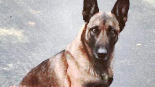 Köpeği ısıran bir kişi tutuklandı