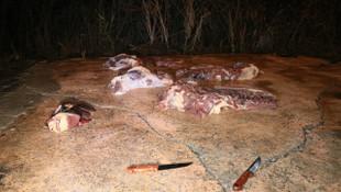Gece yarısı baskın ! 400 kilo at eti ele geçirildi