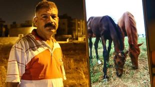 Adana'da yarış atı ve yavrusu çalındı
