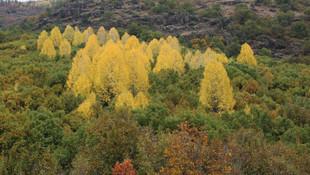 Tunceli'de sonbahar güzelliği