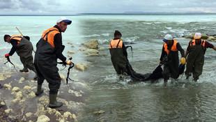 Duyarlı vatandaşın ihbarı Van Gölü'nü kurtardı