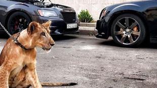 Zenginlerin vahşi hayvan tutkusu tepki çekiyor