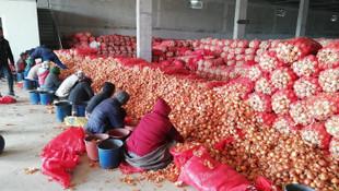 Soğanın fiyatını artırmak için bakın ne yapmışlar