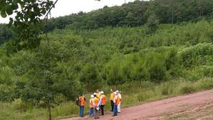 Kocaeli Büyükşehir Belediyesi çöp için ağaç kesecek