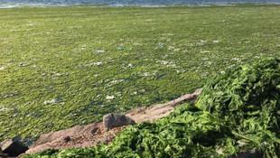 İzmir Körfezi'nde 1 gecede ada oluştu