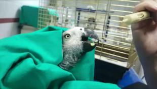 İşkence edilen papağanın son durumu