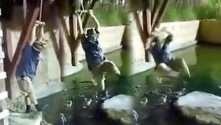 Timsah dolu havuza düştü