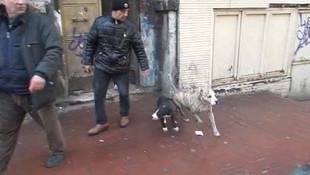 Taksim'deki metruk binada şok! Dövüş köpekleri bulundu...