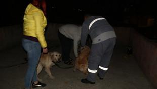 Köpeklere kemerli işkence ! Gözaltına alındı