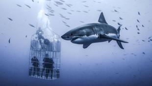 Dev köpek balığını görüntülemek için ölümle burun buruna !