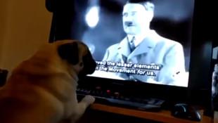 Nazi selamı veren köpeğe ceza