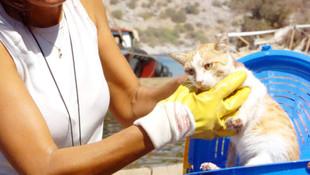 Bodrum'da kedi yavrularını katlettiler !