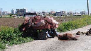 Yol kenarında kesilmiş at ve eşek kemikleri bulundu