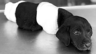 Bacakları kesilen köpekle ilgili gözaltı kararı