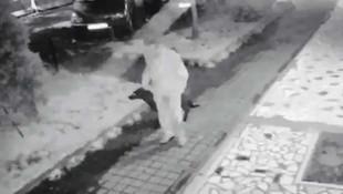 Bir iğrenç olay daha ! Köpeğe tecavüz etti, serbest bırakıldı